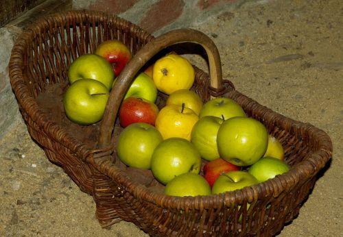 krepšelis,obuoliai,rinkimas