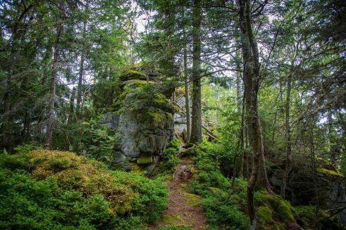 Bavarijos miškas,miškas,dykuma,gamta,kraštovaizdis
