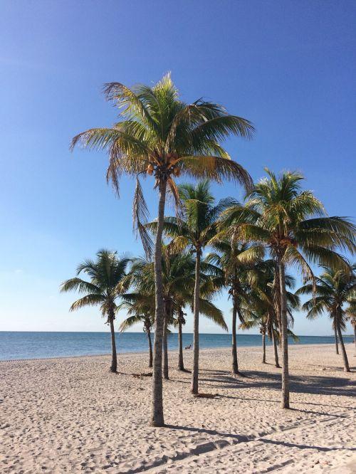 papludimys,palmės,jūra,šventė,kokoso,atogrąžų,karštas,kelionė,egzotiškas,Smėlėtas paplūdimys,laukiniai,rojus,nuostabus paplūdimys,Miami,ramus