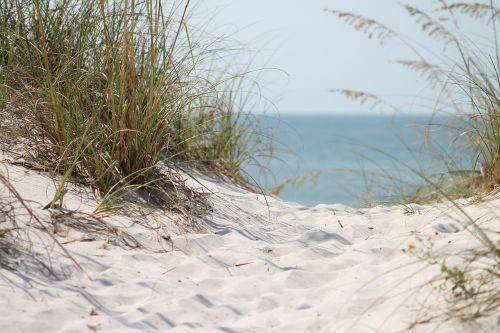 papludimys,vandenynas,žolė,smėlio vandenynas,mėlynas,žalias,gamta,vaizdas