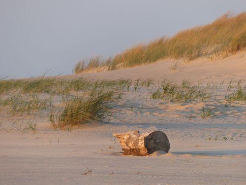 papludimys,smėlis,medžio kamienas,medis,gražūs paplūdimiai,nuostabus paplūdimys,kopos,ispanų,ispanų paplūdimys,charente,france