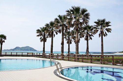 papludimys,baseinas,kelionė,Southland,neperleidžiama,Jeju sala,poilsio zona,palmė,paplūdimys,maudyklos paplūdimys