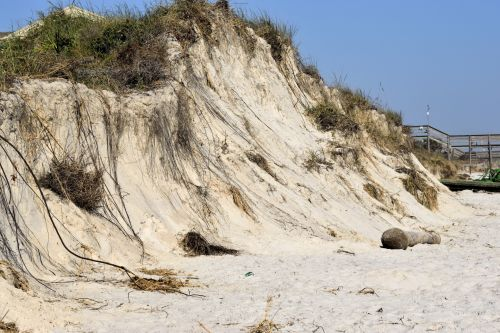 papludimys, sala, kranto, smėlis, kopos, united, geriausia, valstijos, erozija, lauke, sunkus, jūra, scena, vanduo, smėlio, gamta, išnyko, dainininkė, florida, атлантический, kraštovaizdis, vandenynas, paplūdimio erozija florida pakrantė