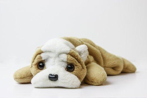 Beanie kūdikis, pliušinis, žaislas, pliušinis žaislas, šuo, rudi, minkštas žaislas, vaikystės, akys, saldus, mažai