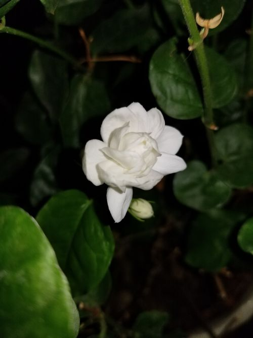 gražus,gėlės,elegancija