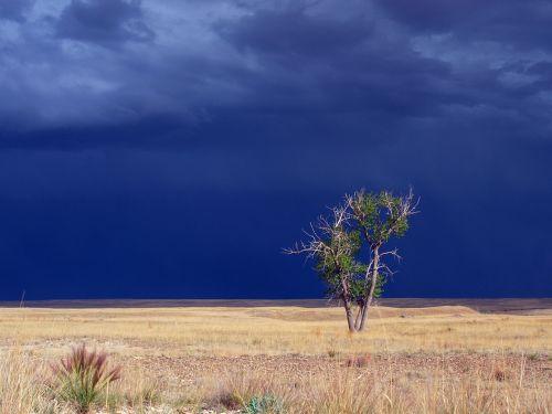 gražus,audringas dangus,debesis,dangus,audra,audringas,griauna,debesys,dramatiškas,šviesa,žemės sklypas,paniuręs,lauke,oras,medis,dramatiškas dangus