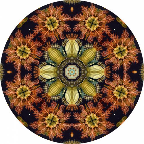 gražus, Kaleidoskopas, ratas, izoliuotas, balta, fonas, spalva, veidrodis, simetriškas, gražus ratas