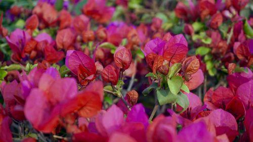 gražios gėlės,gėlių lova,gėlių puokštė,gėlių puokštės,jungtinis gėlė,gėlių sritis,flora,gėlė,gėlių laukas,gėlių sodas,geliu lova,žydėjimas,žydintis augalas,gėlės,rožinis,augalas,raudona