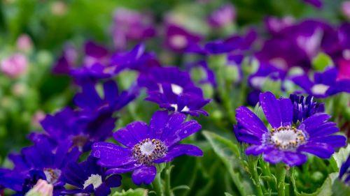 gražios gėlės,gėlių lova,gėlių puokštė,gėlių puokštės,gėlių sritis,gėlė,gėlių laukas,gėlių sodas,sodas,sodininkystė,Namai ir sodas,pavasario gėlė,terasa sodas,violetinė,laukinė gėlė,laukinės gėlės