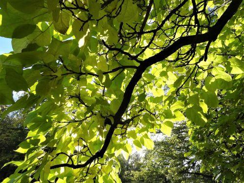 grožis,gamta,ruduo,vasara,fantazija,nostalgija,saulė,gamtos grožis,medžiai,medžiams,gamtos jautrumas,romantika,žalias,auksinis,žalia žalia,medžių šakos