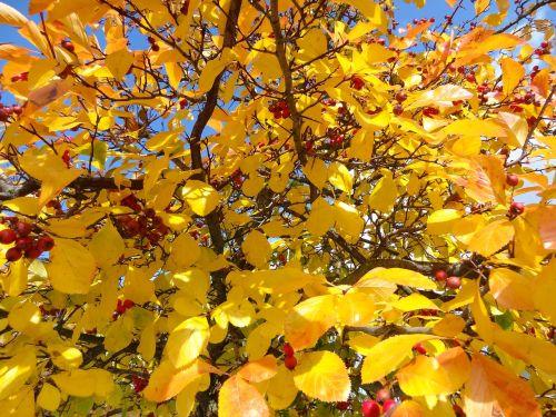 grožis,ruduo,gamta,kraštovaizdis,rudens grožis,romantika,gamtos grožis,medžių šakos,spalvos,auksinis,raudona,Indiška vasara