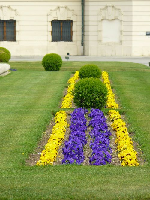 lova,geliu lova,spalvinga,spalva,pavasaris,žydėti,dekoratyvinis augalas,sodas,parkas,gėlių dizainas,žiedas,žydėti,gamta,žydėjo,gėlių,flora,gėlė,skubėti,gėlės,žalias,knyga,dėžutė,krūmas,periwinkle,buxus,Pansy,vejos vejapjovė