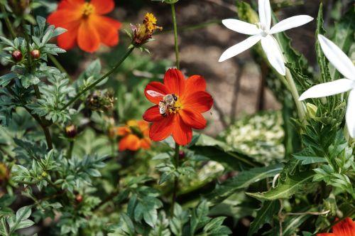 bičių,gėlės,botanikos sodas,sodas,apdulkinimas,žiedlapiai,žiedadulkės