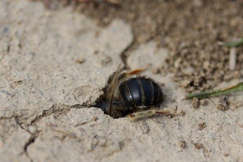 bičių, laukinių, den, skylė, Insecta