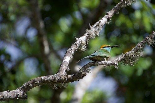 bitininkas, paukštis, spalvinga, pobūdį, atogrąžų paukštis, žalia paukščiai, snapas, medis, plunksnų, smailu snapas