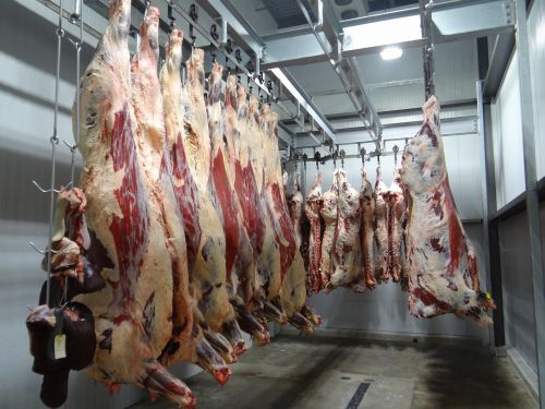 jautiena,karvė,skerdyklos,skerdyklos,apdorojimas,įrenginys,mėsa,maistas,mėsininkas