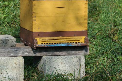 avilys,bitės,vabzdys,medus,bitininkas,medus bitės,gamta,gyvenama struktūra,bičių aviliai,medaus gamyba,bitininkystė
