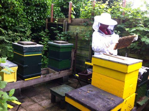 bitininkas,bitės,spintos