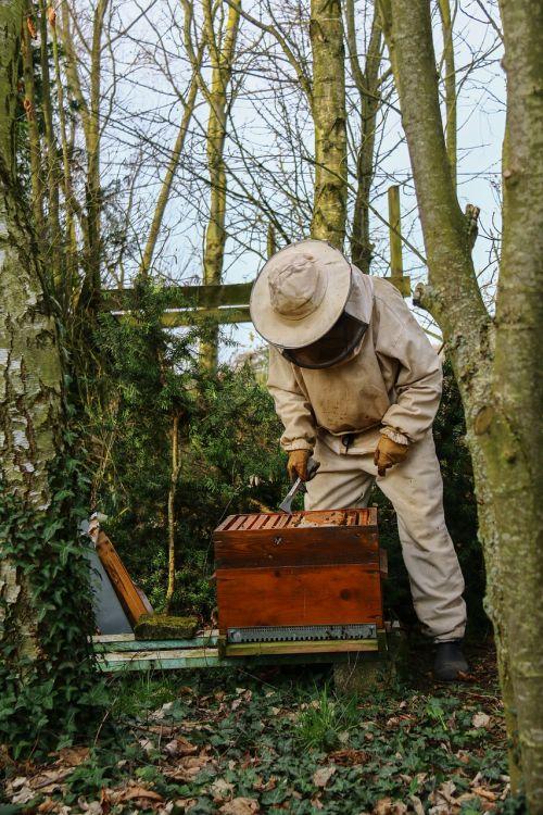 bitininkas,medus,avilys,bitės,gamta,bitininkystė