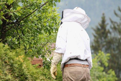 bitininkas, bičių laikymas, bitininkystė, bitininkystė, apsauginiai rūbai, uždanga šalmas, Bitininkai drabužiai, apranga, medaus gamybai, bitės, Stingas, avilys, vabzdys