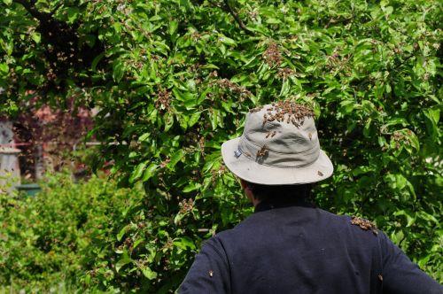 bitininkas,bitės,avilys,medus bitės,medus,laisvalaikis,hobis,bičių veisimas,gamta,vabzdys,bitininkystė