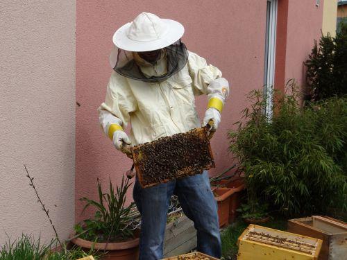 bitininkas,medus,bitininkystė,medus bitės,bitės,maistas,avilys,medaus puodą,avilys,saldus,parduodamas medus,vabzdys,gamta,bičių namai,hum,surinkti,kruopštumas,skrydžio vabzdys
