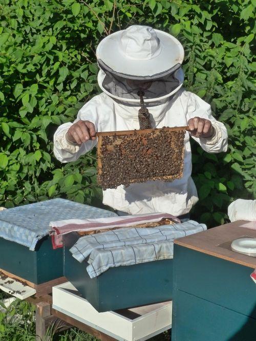 bitininkas,veislininkė,bitės