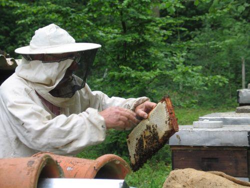 bitės,bitininkystė,medus,bitininkas,bityna,beegarden