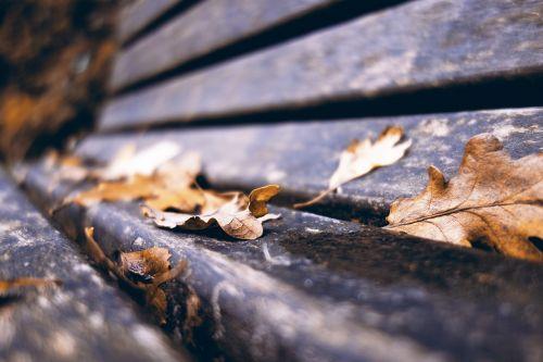 stendas,medinis stendas,parko suoliukas,kritimo lapai,ruduo,makro,perspektyva