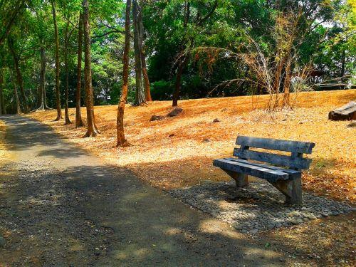 stendas,sodas,lauke,atsipalaiduoti,mediena,gamta,sėdynė,medis,kėdė,ruduo,taikus,senas,kelias,vienišas,tuščia,žalias