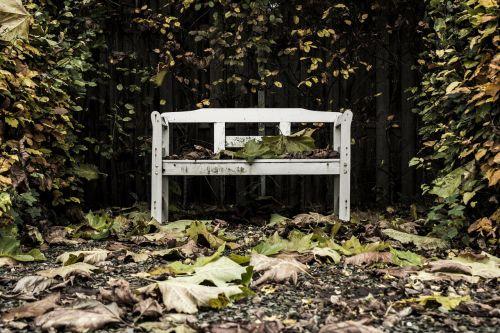 stendas,medžiai,lapai,ruduo,galinis kiemas,ištemptas,kaimiškas,kritimas,aplinka,gamta,vienišas,taikus,tuščia