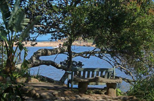 medžiai, atspalvis, atskirti, stendas, lagūnas, vanduo, stendas šešėlyje šalia lagūnos