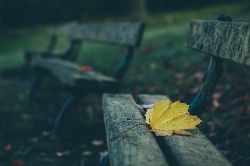 suolai,lauko gylis,lapai,mediena