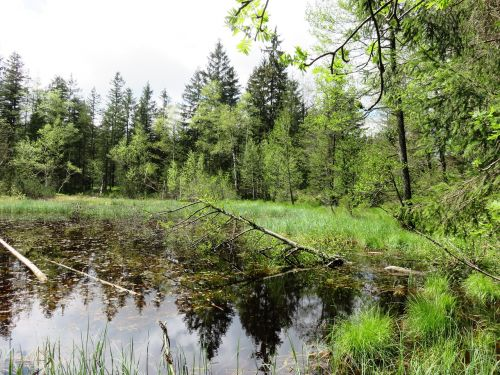 Bergsee,gamta,lėčiau kalnas