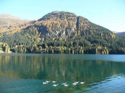 Bergsee,antis,ežeras