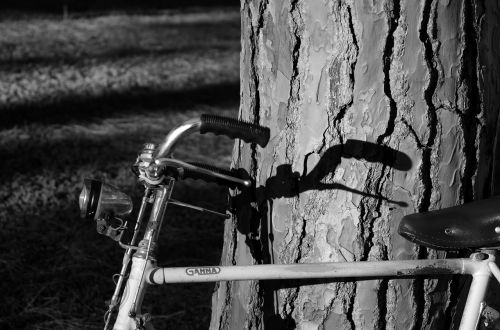 dviratis,medis,šešėlis,vairai