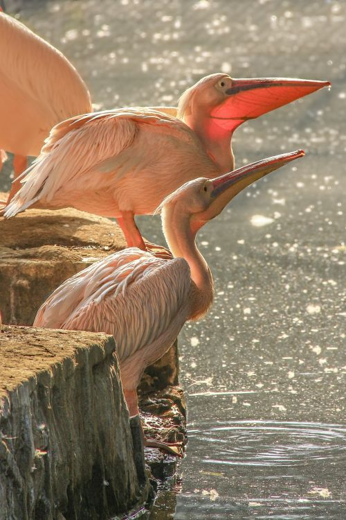 didelis,paukštis,zoologijos sodas,giza,Egiptas,šventė,aplankyti,mielas,sodas,gražus,nuostabus,nuostabus,kelionė,turistinis