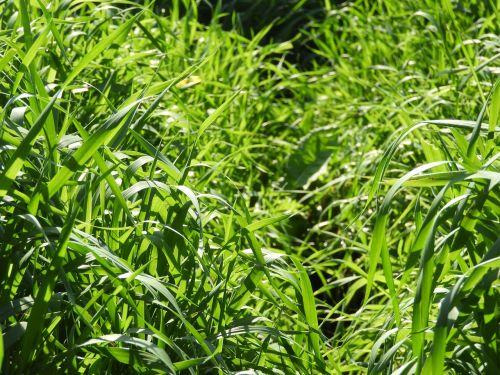 didelė žolė,žolė,augalas,žalias,gamta,pieva,laukas,pievos gėlė,agra augalas,laukinė gėlė,vasara,Daisy,augalai,ruduo,sodas,violetinė,katė,kiemas,grybai,kačiukas,vicky,lev,žalia žolė,sraigė,gėlės,saulės šviesa,raudona,žole augalas,kumpas,rožinis,Boružė,nuotaika,gyvūnas,gėlė,pavasaris,wildflower