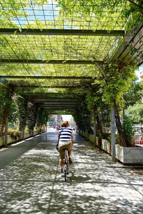 dviračių lenktynininkas,perspektyva,padengtas,augalai