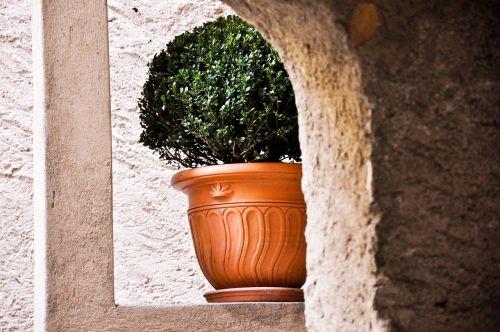 Biogno, Ticino, Botanika