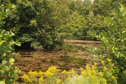 biotopa,aplinka,ežeras,vasara,jūros dumbliai,žydėti,žalias,svajingas,svajonė,idilija,vandenys,nuolatiniai vandenys