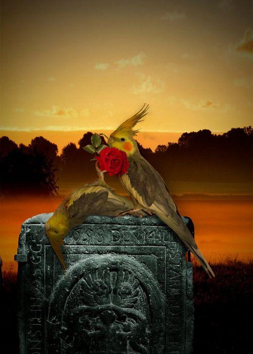 paukštis,mirtis,mirė,kapinės,šaudyti,miręs parapetas,miręs,gedulas,avarija,gamta,skausmas,atsitiktinė mirtis,plunksna