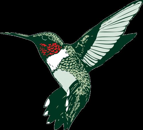 paukštis,Hummeras,kolibris,rubino kaukė,nemokama vektorinė grafika