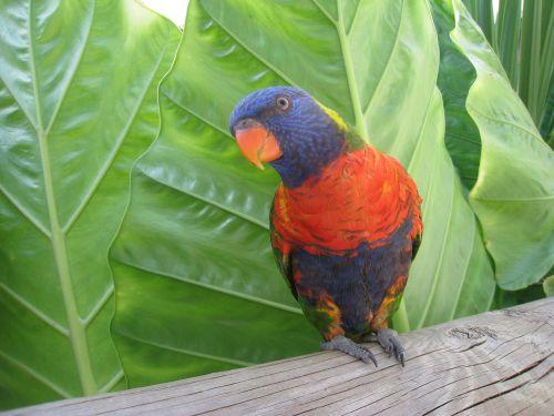 paukštis,gyvūnas,afrika,zoologijos sodas,pietų Afrika,gyvūnų pasaulis