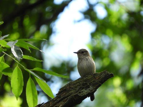 paukštis,filialas,miškas,medis,paukščiai,filialas,filiale,gamta,gyvūnas,mažas paukštelis