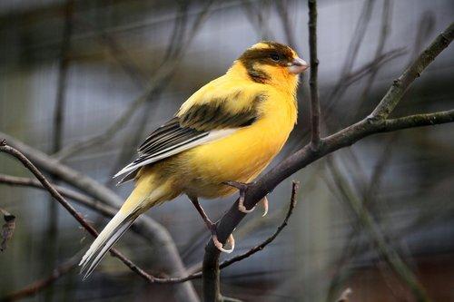 paukštis, Gyvūnijos pasaulyje, plunksna, paukščiai, gyvūnas, Iš arti, Bill, spalvinga, egzotiškas, egzotiškas paukštis, geltona, laukinių, pobūdį, Tropical, plunksnos, egzotiški paukščiai