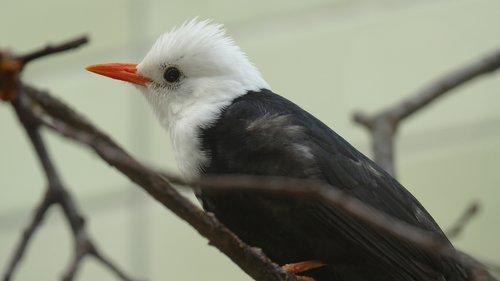 paukštis, pobūdį, gyvūnas, Gyvūnijos pasaulyje, egzotiškas, plunksnos, plunksna, egzotiškas paukštis, skraidantis, Nemokama iliustracijos