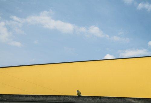 paukštis, mėlynas dangus, gatvės spalvos, dangus, debesys, pobūdį, mėlyna, gyvūnas, Sol, saulėta diena, Brazilija, Gatvė, geltona, spalvingas