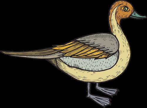 paukštis,antis,sparnai,stovintis,plunksnos,plunksnos,nemokama vektorinė grafika