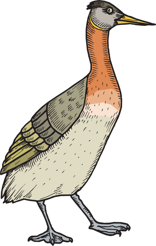 paukštis,antis,sparnai,vaikščioti,plunksnos,plunksnos,nemokama vektorinė grafika